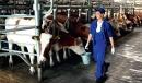 Российским фермерам будут возмещать затраты на продвижение продукции